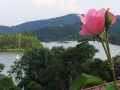 la-rosa-del-lago